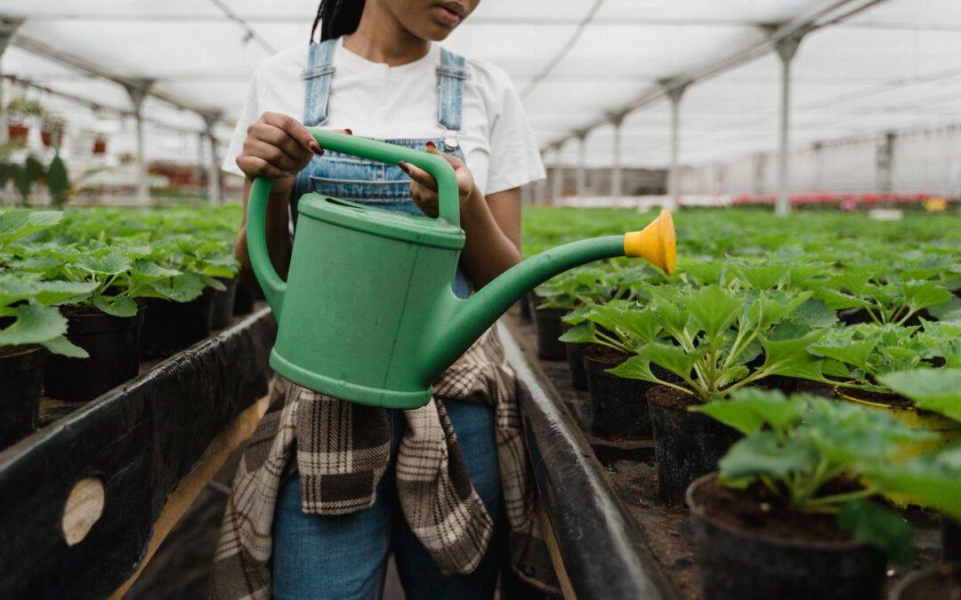 In unserer Gärtnerei produzieren